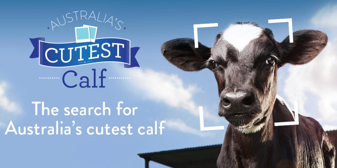 Cutest Calf Competition logo