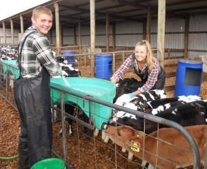 calf_rearing_1