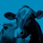 herd_health