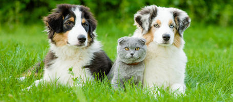 VetChat Pets Image