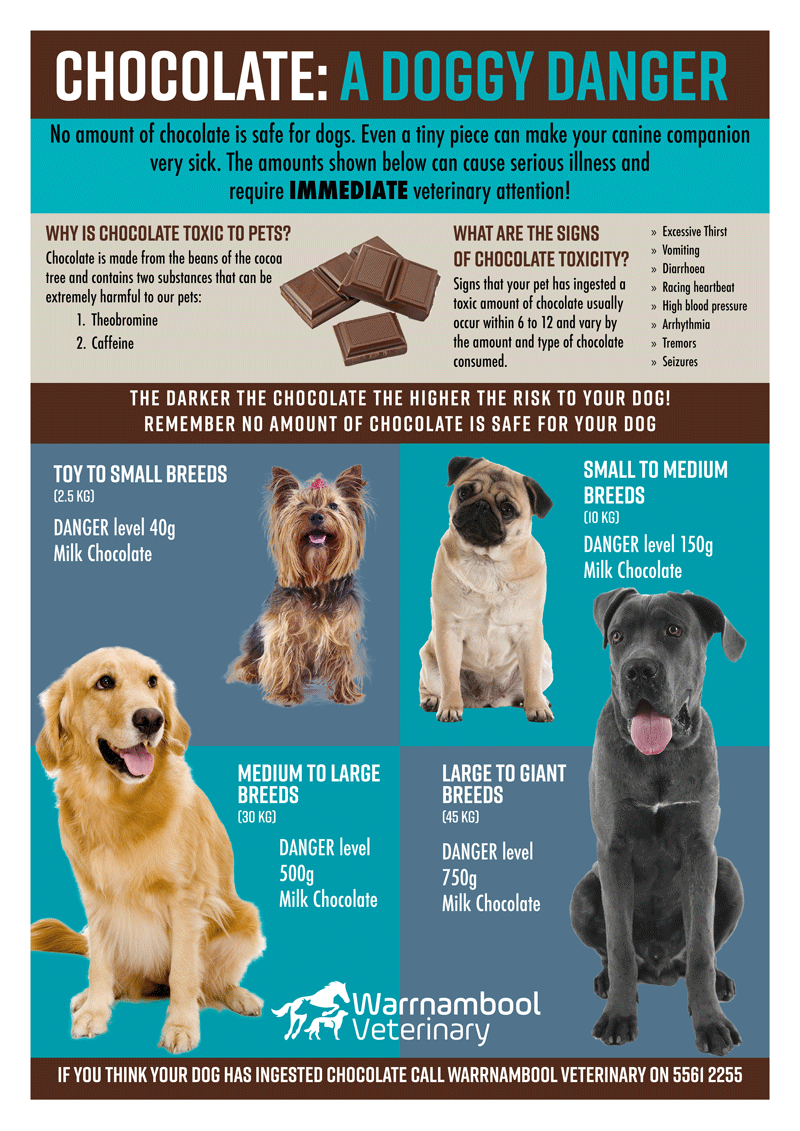 How To Treat Chocolate Poisoning In Dogs
