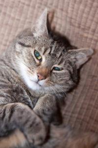 old_cat