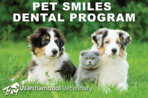 pet-smiles_blurb_image